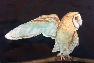watercolour painting print of barn owl at night in the moonlight