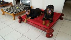 DUKE ( KING SIZE) DOG BED 54x54'