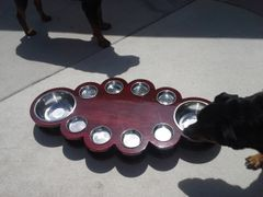 Ten bowls cat/ small dogs feeding table