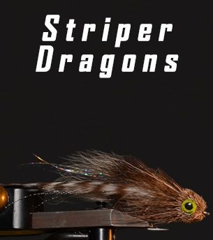 Striper Dragon