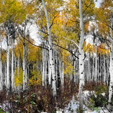 Steamboat Springs Fine Art Photography