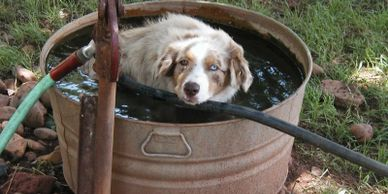 """We were looking for a special buddy for our deaf Mini Aussie, Skye. We had lost our long time frien"