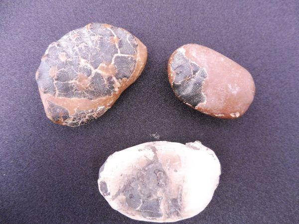 Fossil Crab for Sale x 3 - Kent, UK - Eocene