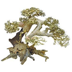 *ONLINE ONLY* Superfish Natural Wood Bonsai Driftwood Large