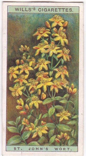 A Series No. 38 St. John's Wort