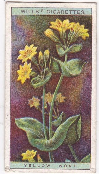 A Series No. 50 Yellow Wort