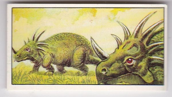 No. 18 Styracosaurus