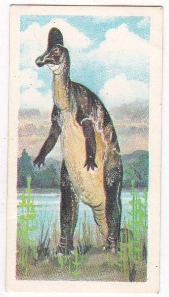 No. 23 Corythosaurus