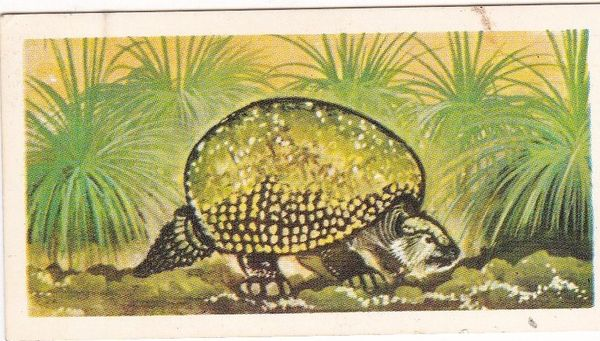 No. 47 Glyptodon