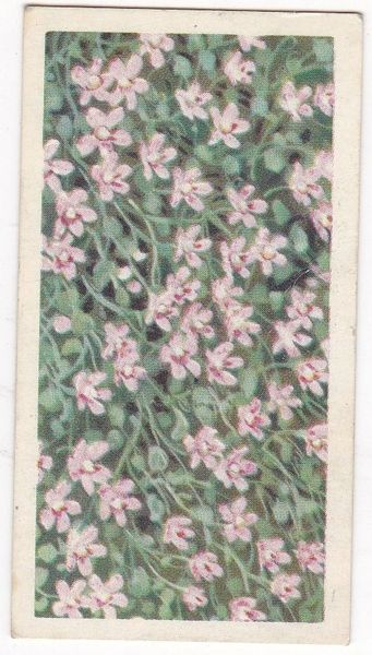 Series 3 No. 45 Bog Pimpernel