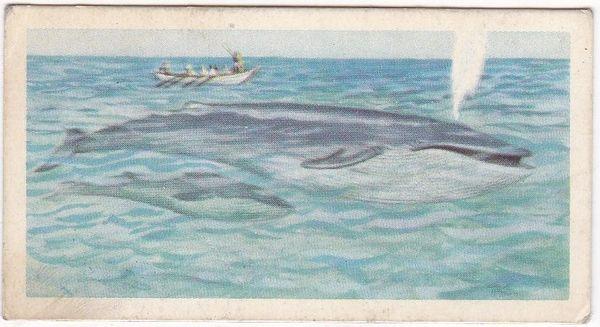 No. 07 Blue Whale