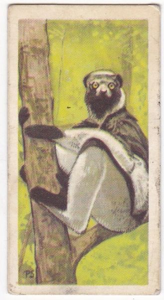 No. 05 Indri