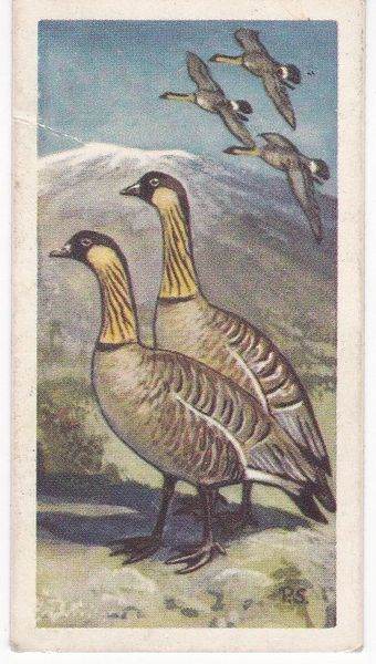 No. 28 Ne-Ne or Hawaiian Goose
