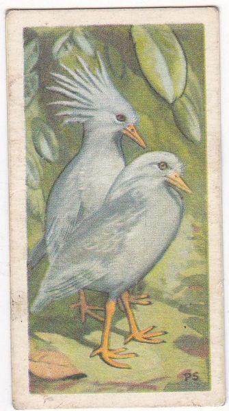 No. 34 Kagu