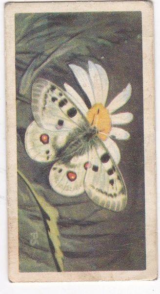 No. 50 Alpine Apollo Butterfly