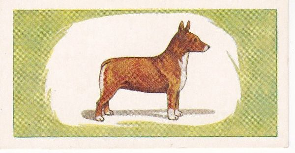 No. 19 CORGI