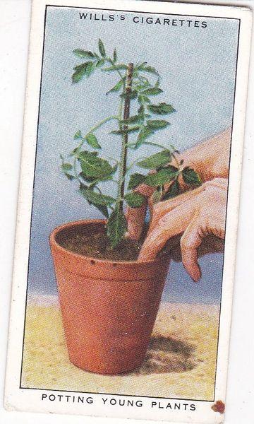 No. 47 Potting Young Plants