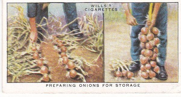 No. 32 Preparing Onions for Storage