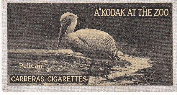 No. 13 Pelican