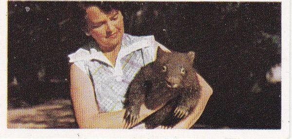 No. 19 Wombat