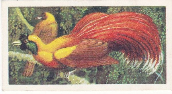 No. 49 Red Bird of Paradise
