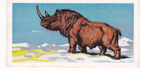 No. 32 Woolly Rhinocerous