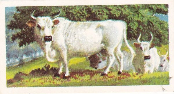 Brooke Bond Tea Ltd. No. 03 Wild White or Park Cattle