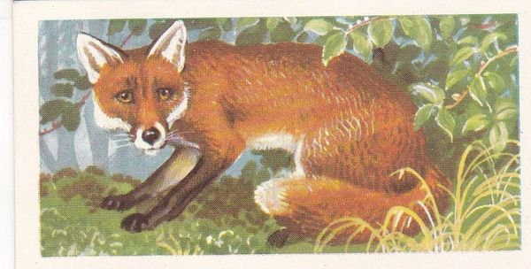 Brooke Bond (Great Britain) Ltd. No. 09 The Fox