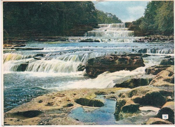 Post Card Yorkshire AYSGARTH The Lower Falls Walter Scott Natural Colour Series C.Y.649