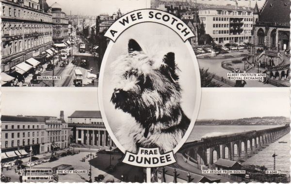 Post Card Scotland Dundee A Wee Scotch frae DUNDEE Valentine's
