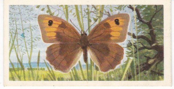 No. 07 Meadow Brown