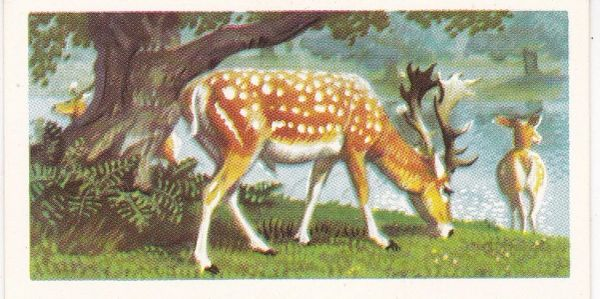 Brooke Bond Tea Ltd. No. 05 The Fallow Deer