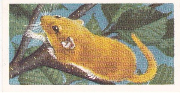 Brooke Bond & Co. Ltd. No. 26 The Dormouse