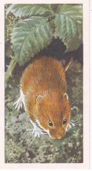 Brooke Bond & Co. Ltd. No. 27 The Bank Vole
