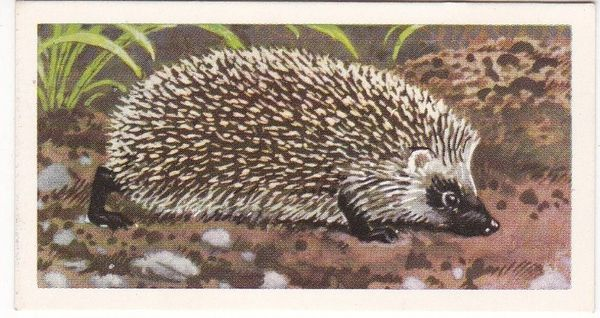 Brooke Bond Tea Ltd. No. 08 The Hedgehog