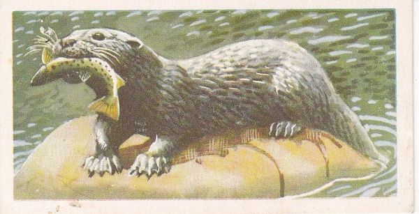 Brooke Bond & Co. Ltd. No. 11 The Otter