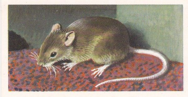 Brooke Bond & Co. Ltd. No. 32 The House Mouse
