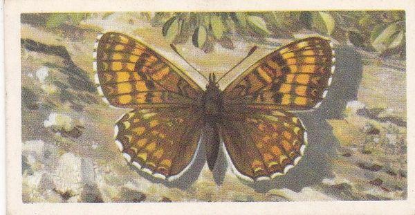 No. 17 Heath Fritillary