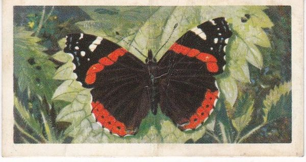 No. 19 Red Admiral