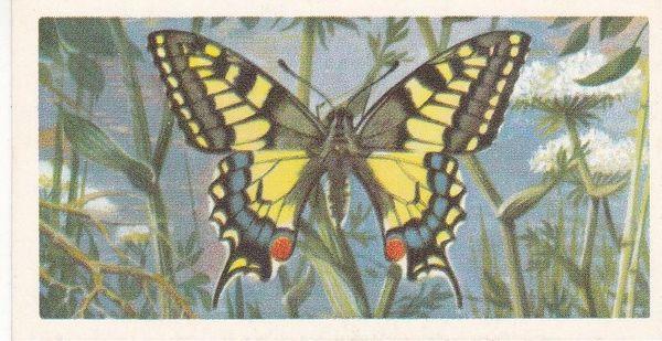 No. 28 Swallow-Tail
