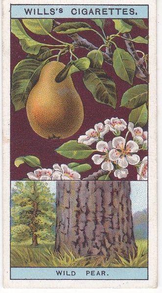 No. 36 Wild Pear
