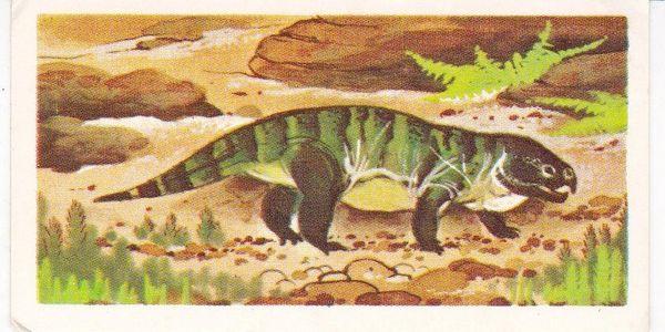 No.07 Stenaulorhynchus