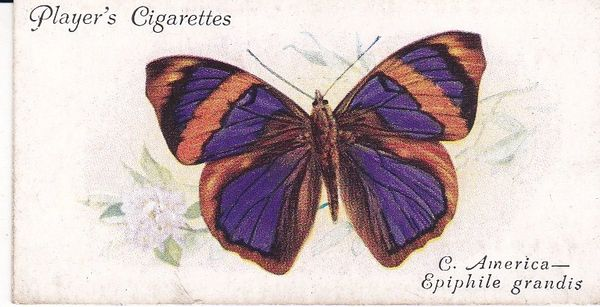 No. 26 Foreign Butterflies: Central America - Epiphile grandis