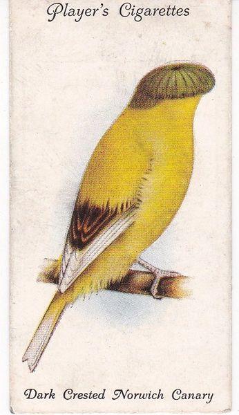 No. 02 Dark Crested Norwich Canary
