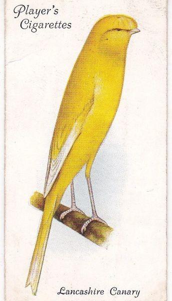 No. 12 Lancashire Canary