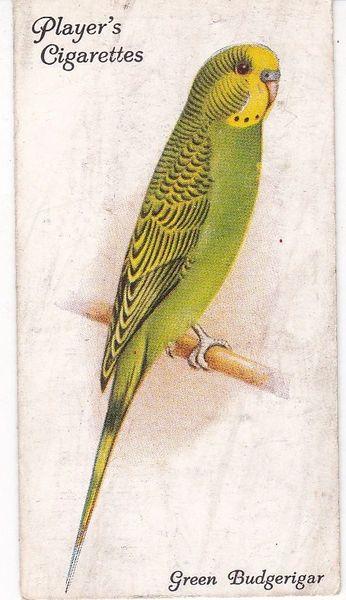 No. 20 Green Budgerigar