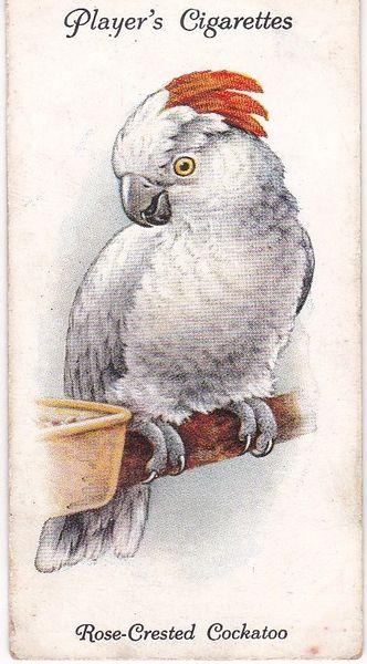 No. 31 Rose-Crested Cockatoo
