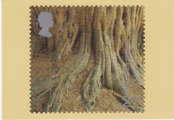 Post Card 2nd stamp issued 1 August 2000 depicting YEWS For the Millenium