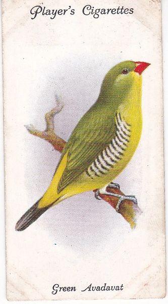 No. 35 Green Avadavat