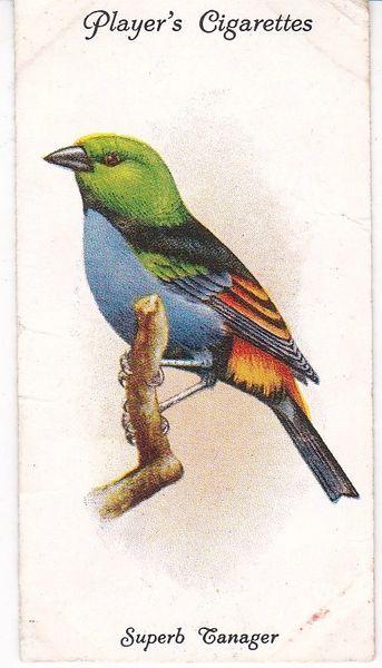 No. 36 Superb Tanager